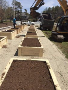 Ocean View filled the boxes with soil.